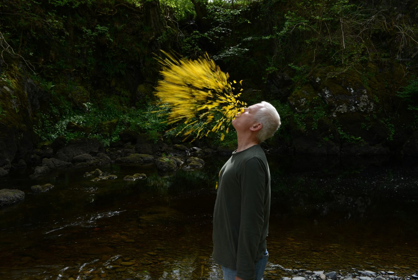 Leaning into the Wind: Andy Goldsworthy best rated film AFFR 2018